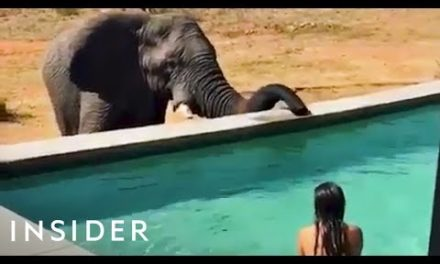 Swim Up Close With Elephants In This Pool