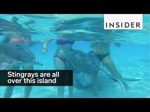 This sandbar in the Cayman Islands is Stingray City
