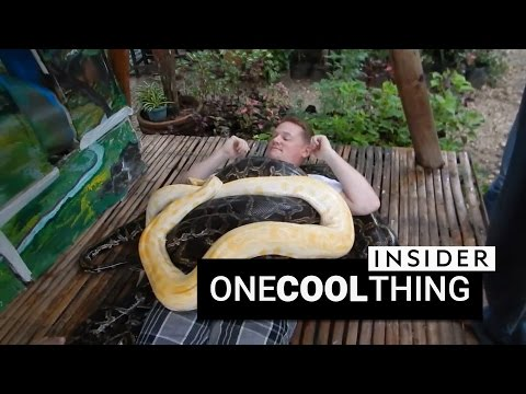 Get a massage from four giant pythons | One Cool Thing