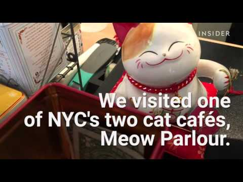 This cat cafe is heaven for cat lovers
