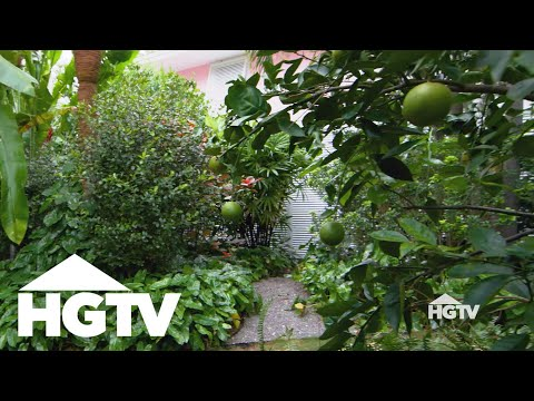 Design Tips | All About Fruit Trees – HGTV